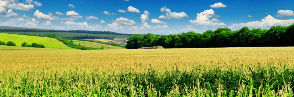 Seed Corn Field